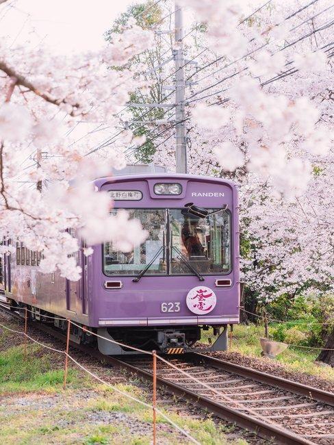 Paarse trein tussen roze bloesem op rails