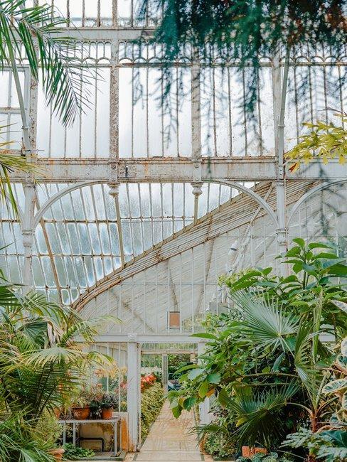 Witte kas met glas en botanische tuin en planten