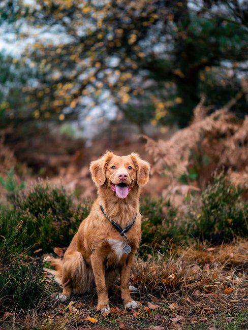 Bruine hond in bergachtige omgeving