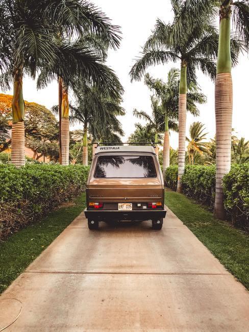 Bruin busje van achter gefotografeerd op een stoep tussen de palmbomen