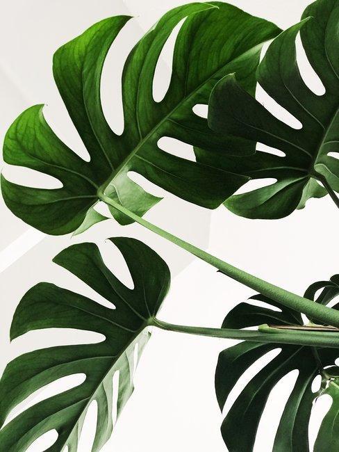 Groen blad ingezoomd op witte achtergrond