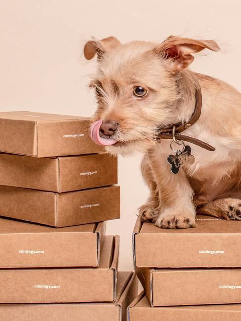 hond op kartonnen dozen