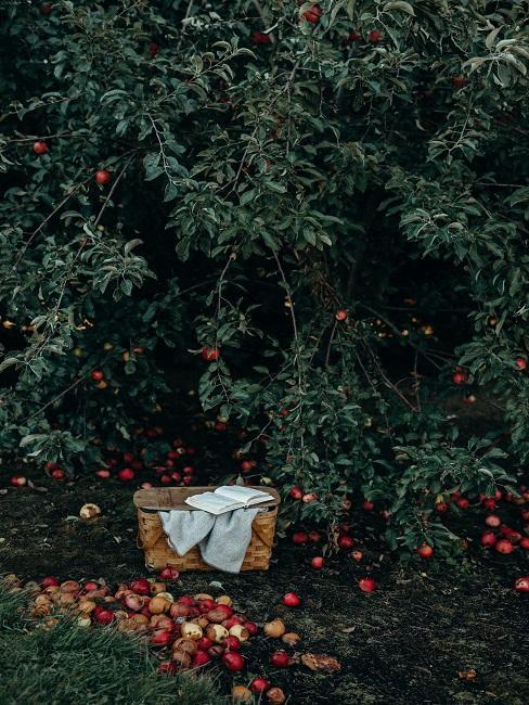 Boomsoorten appelboom met appels op de grond