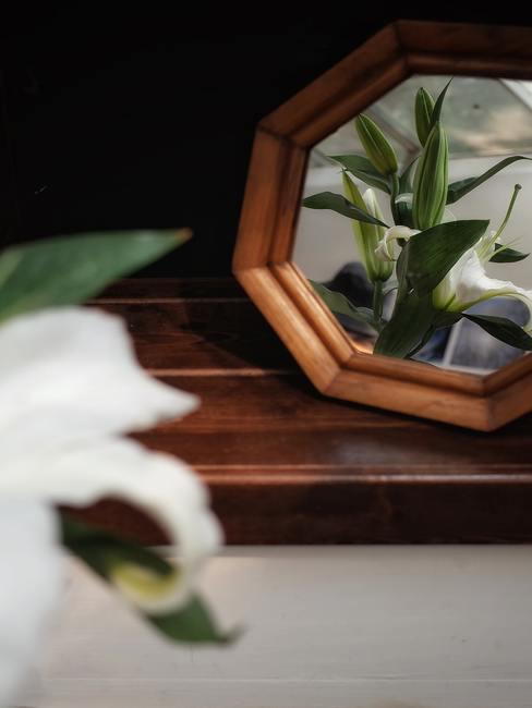 Een plant in een spiegelbeeld