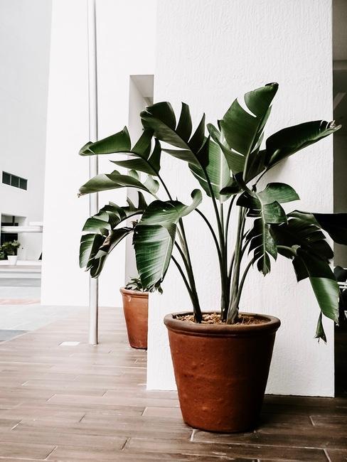 Monstera in een bruine plantenpot een woonkamer