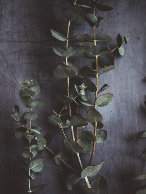 Eucalyptus deco met een par takken op een grijze achtergrond