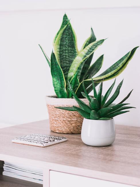 Planten in witte plantenpotten op houten sideboard