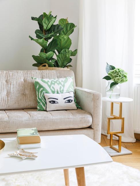 Grote plant in de woonkamer achter de witte bank