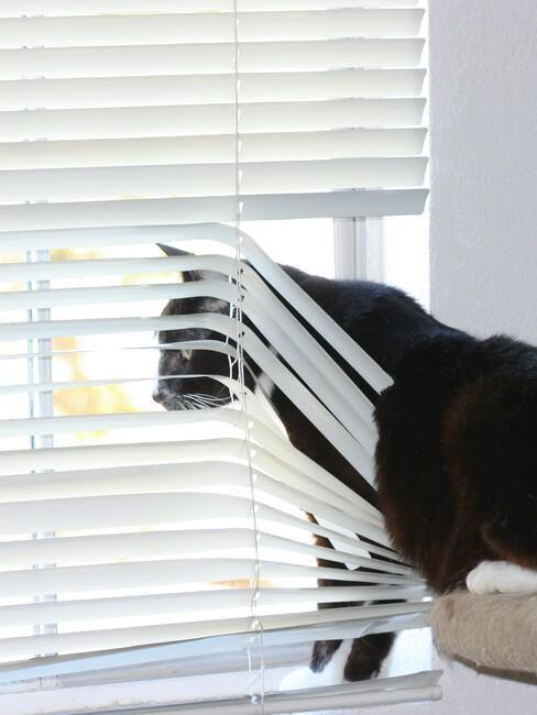 zwarte kart kijkt uit het raam