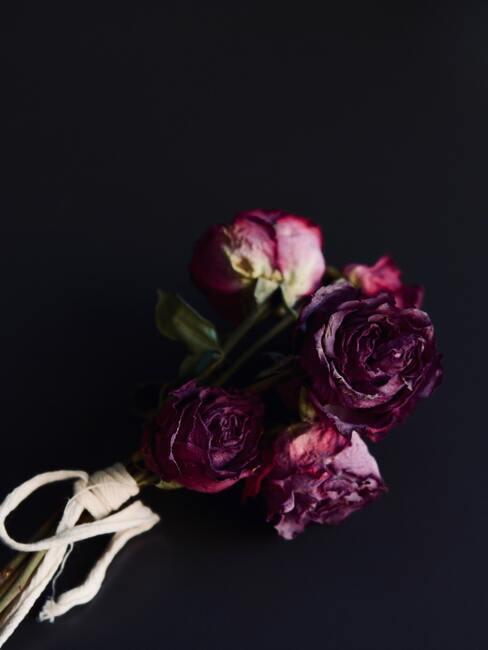 Roze rozen met witte strik op zwarte achtergrond