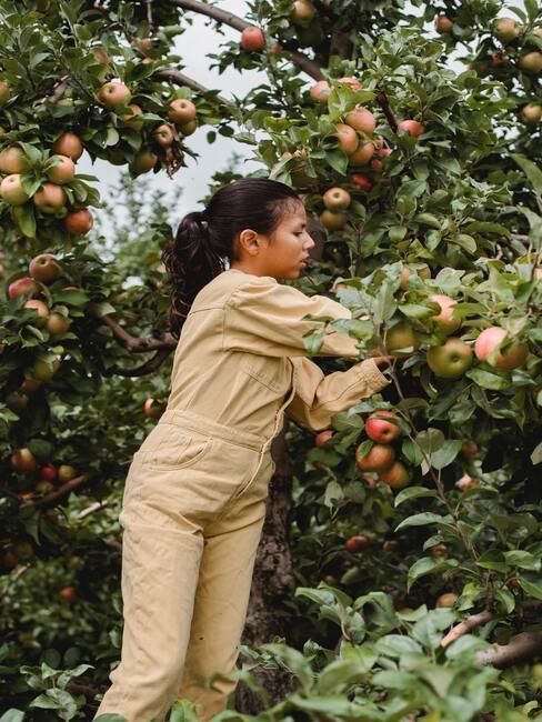 Appelboom snoeien: de vrouw in de tuin zorgt voor de bomen