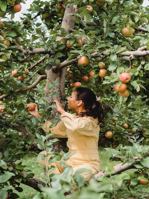 De vrouw in de tuin zorgt voor de bomen