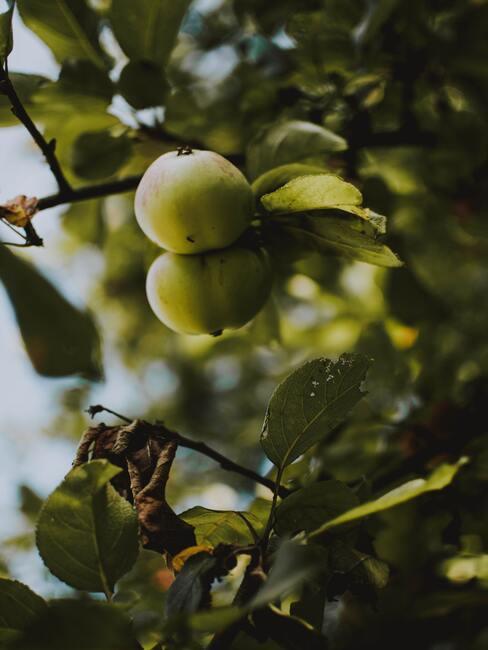 Boomgaard voor het kweken van fruit