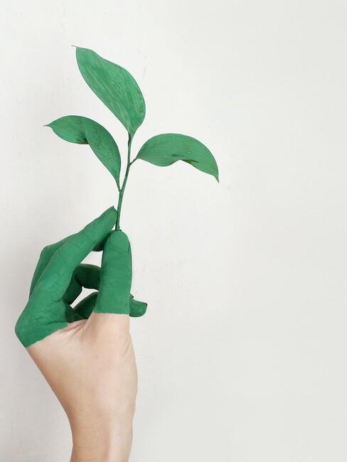 Groene vingers en plantje