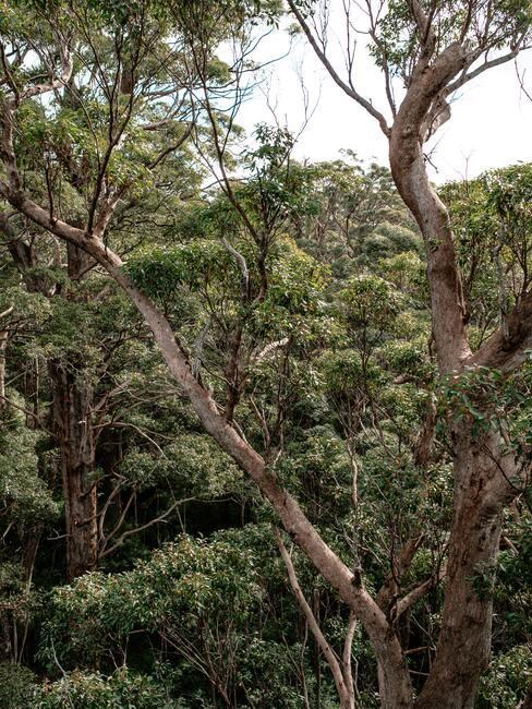 Bos met groene bomen