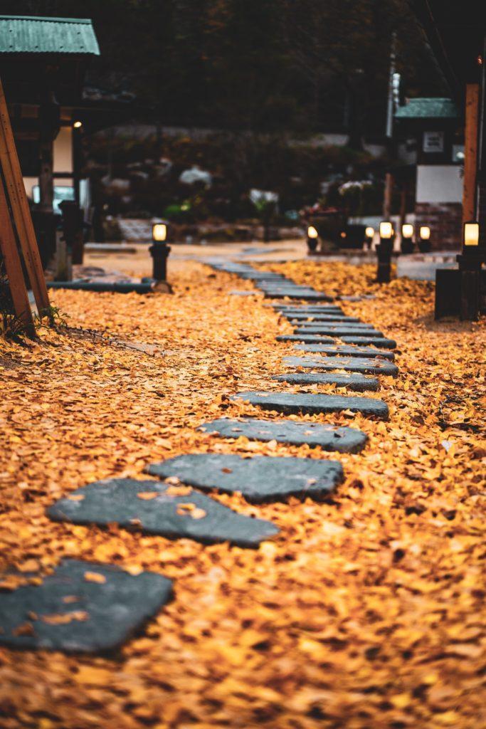 stenen pad door een bos