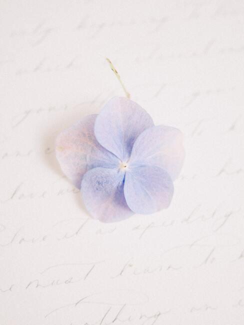 bloemblaadjes van bloemen
