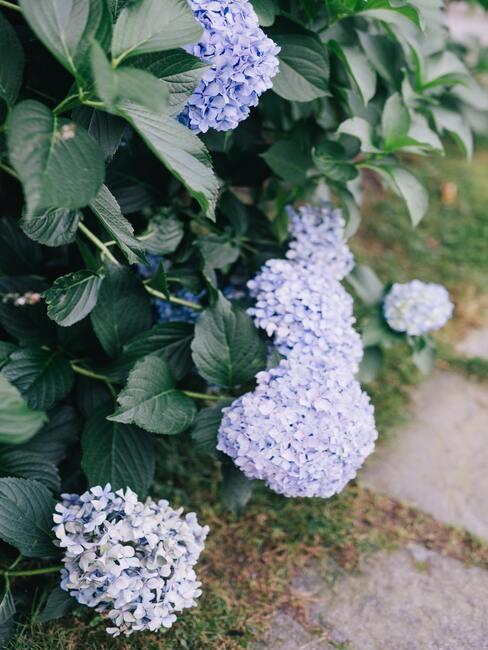 bloemen in de tuin, bloemenverzorging