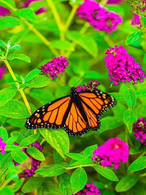 vlinders op bladeren van planten