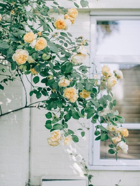 Bloemen in de tuin naast het raam