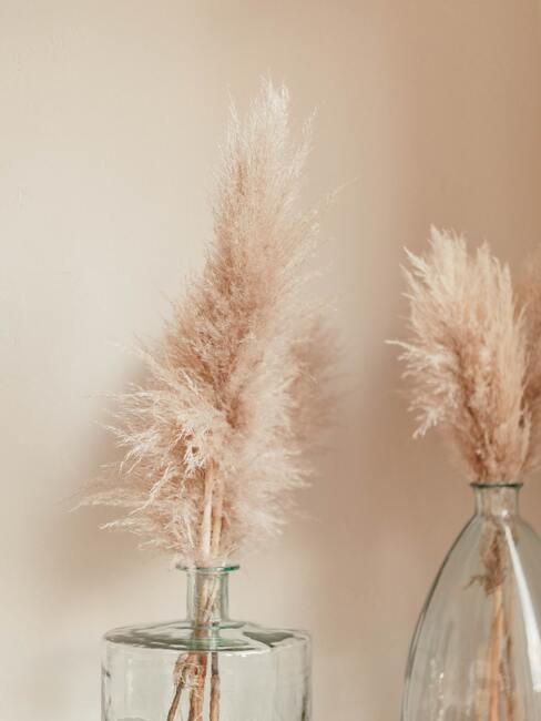 Gesneden pampasgras in transparante vazen