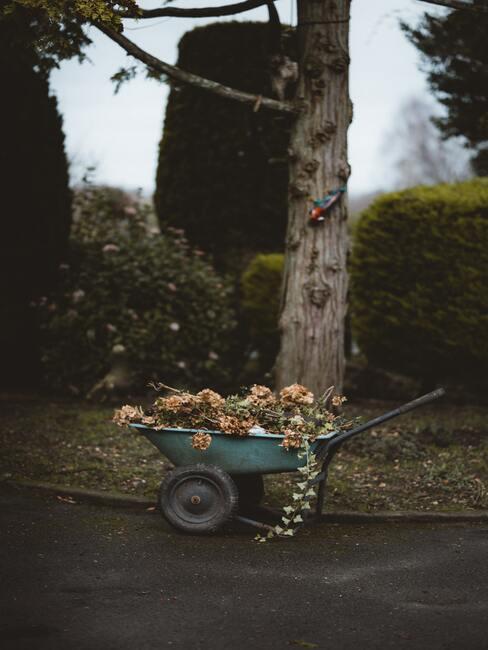 Close-up kruiwagen met gesnoeid groen en boom op de ahctergrondien