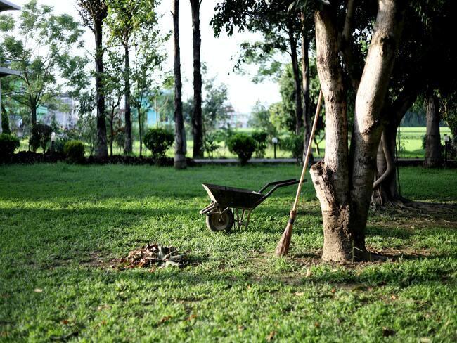 Bomen snoeien: kruiwagen n tuin, bezem leunend tegen boom en opgeruimd groen