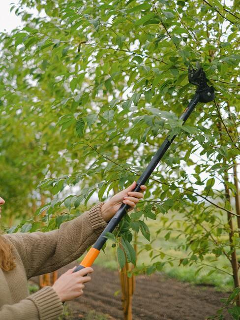 Bomen snoeien met professionele takkensnoeier