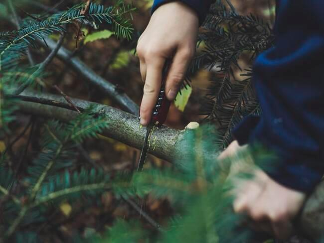 Bomen snoeien: tak afknippen met mes