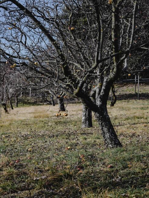 Verzorgen van planten en bomen in de herfst- en winterperiode
