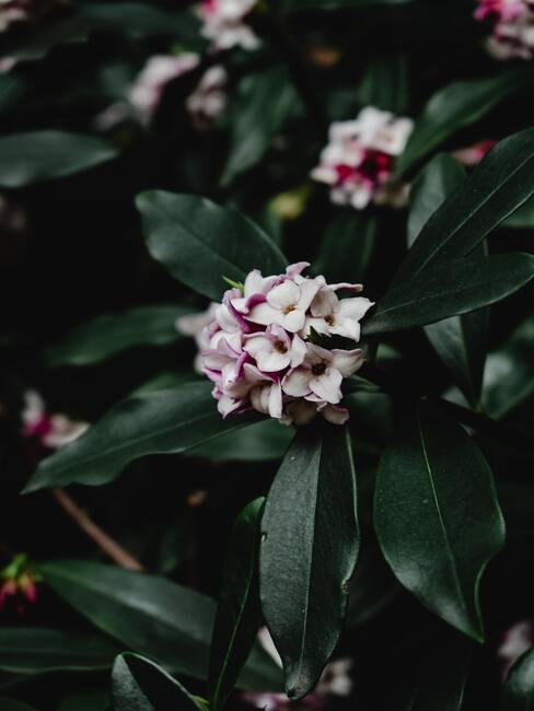 Verzorging in de herfst zodat ze mooi kunnen bloeien in de lente en zomer