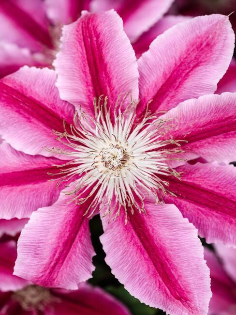 Bloemen in de tuin, water geven en verzorgen