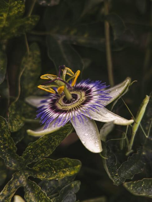 Bloemknoppen bloeien in de zomer