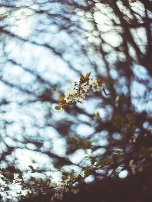 perenbloesems bloeien in de lente, plantenverzorging