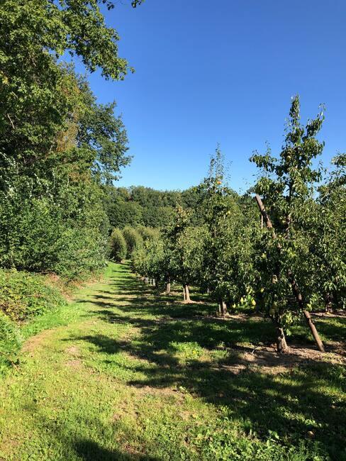 fruitboomgaardverzorging vóór de winterperiode
