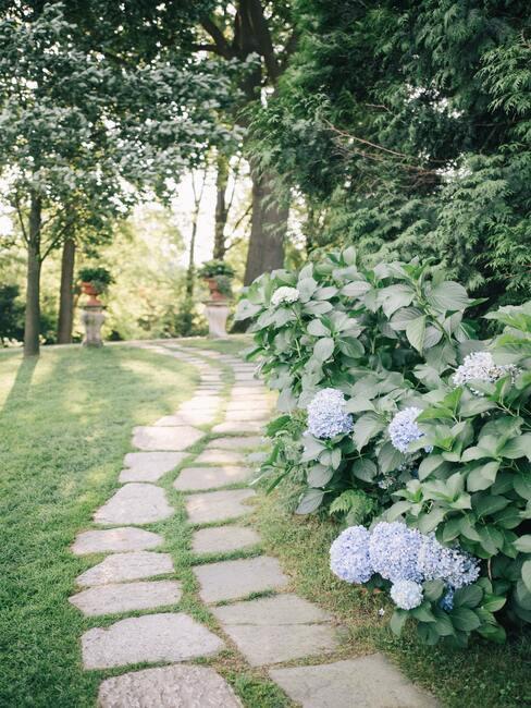 Mooie en vertakte bloeiende planten in uw eigen tuin