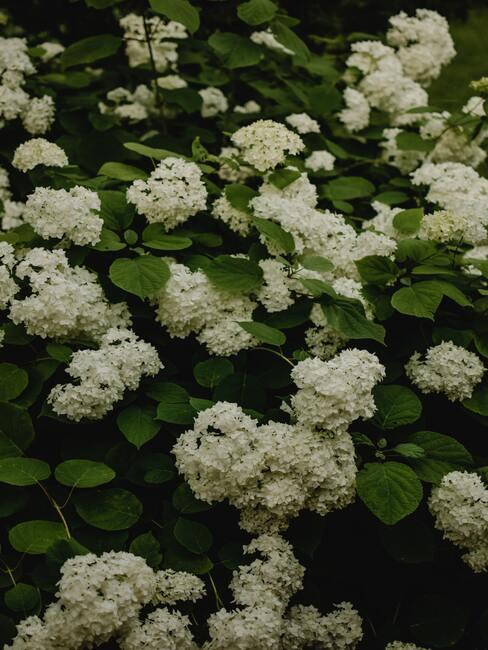 Verzorging van bloeiende planten in de tuin voor de winterperiode