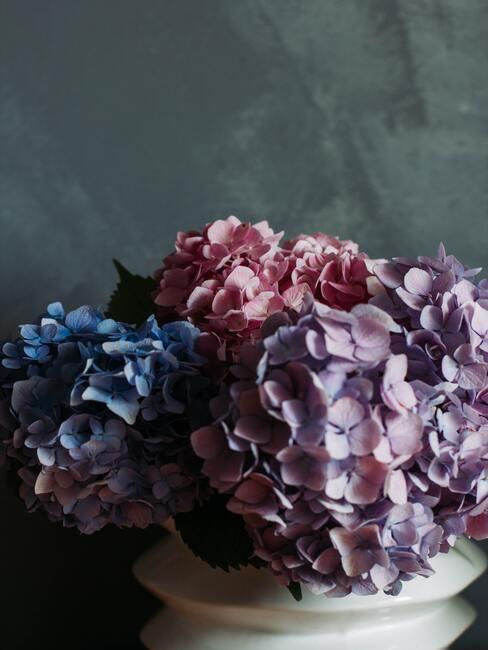 Vers gesneden hortensia in decoratieve vaas van keramiek