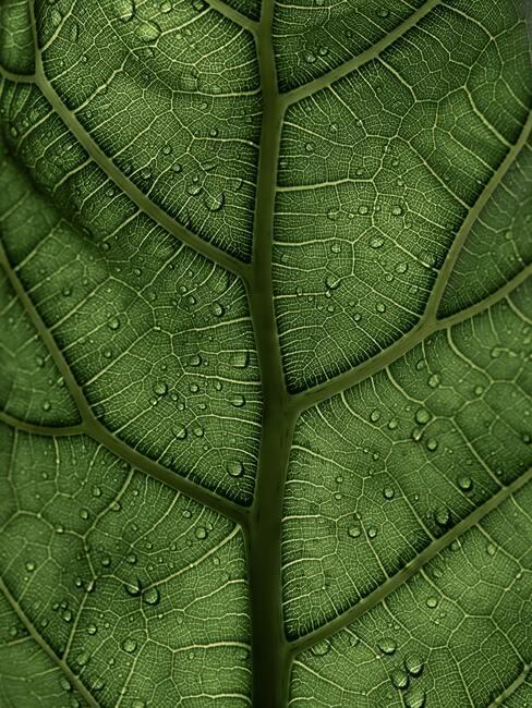 Mooie groene bladeren van de vijgenboom