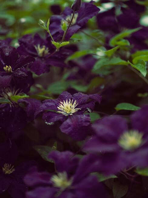 Planten en bloemen in de tuin