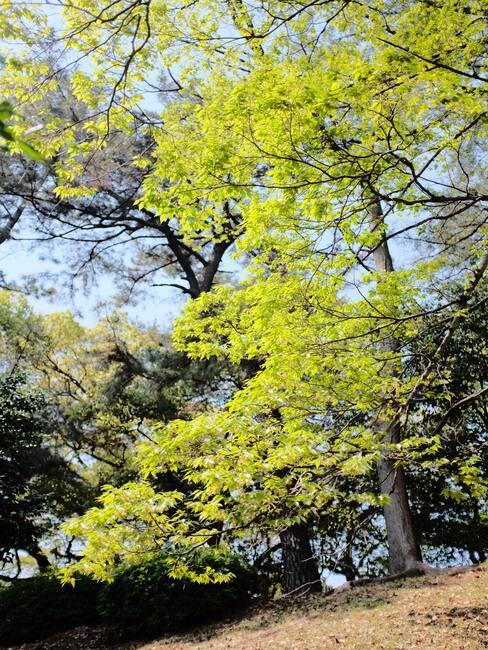 verzorging van bomen en planten in de herfst- en winterperiode