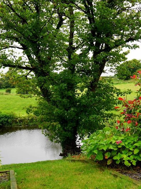boom aan het water met gras ervoor