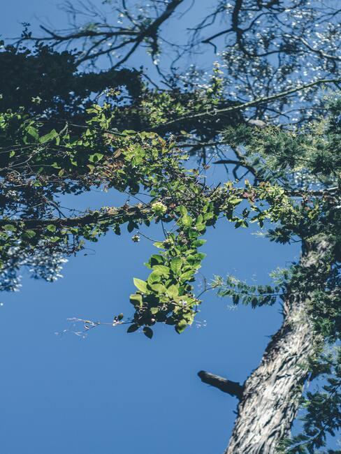 verzorging van bomen en struiken in de herfst- en winterperiode