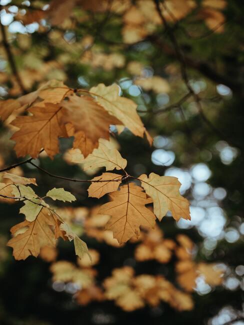 herfst aura in de tuin