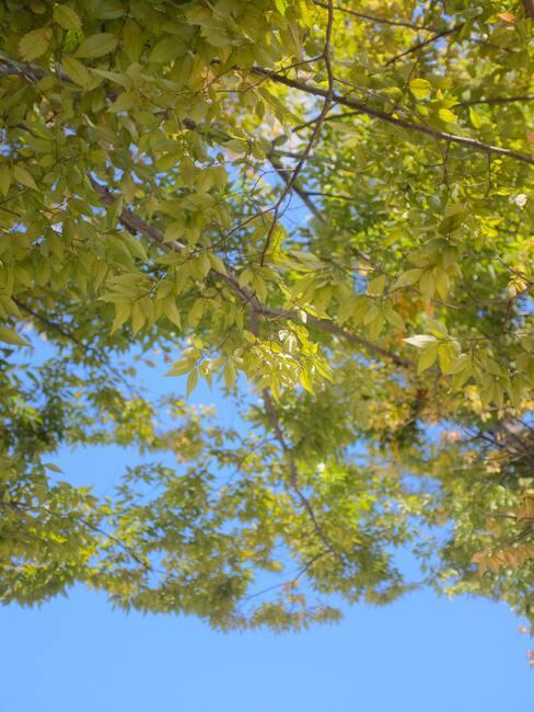 loofbomen in de tuin