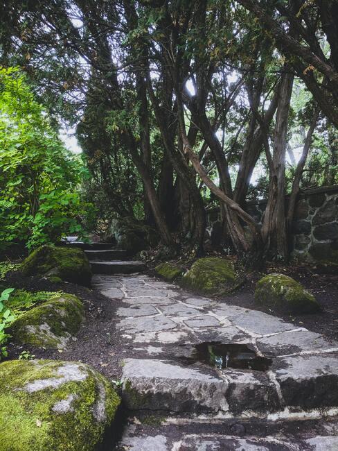 Mooie grote tuin met diverse planten en struiken