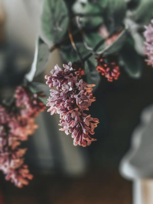 bloemen en struiken in de tuin - zorg voor de winterperiode