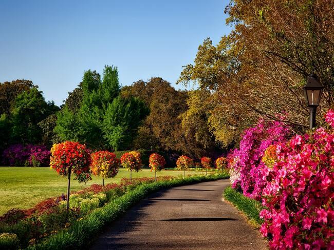 Mooie tuin met kleurrijke struiken en bomen in de zomer