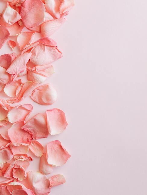 Valentijn versiering blaadjes