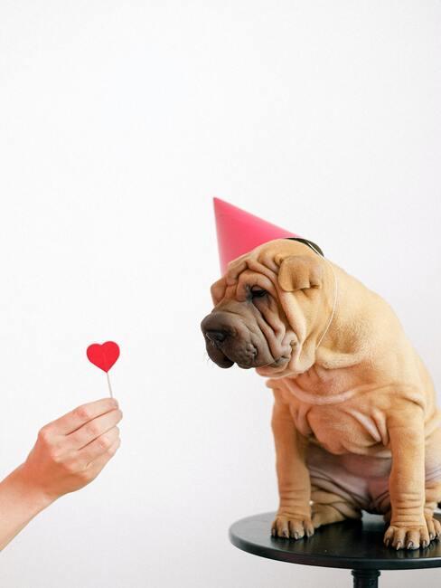 Liefde voor je hond
